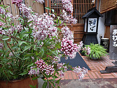 Fujibakama